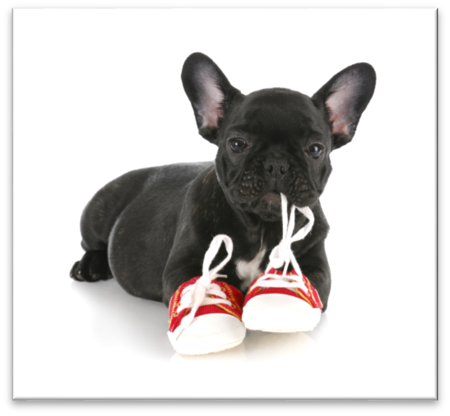 The 10 Rules to Effectively & Positively House-Training Your Dog