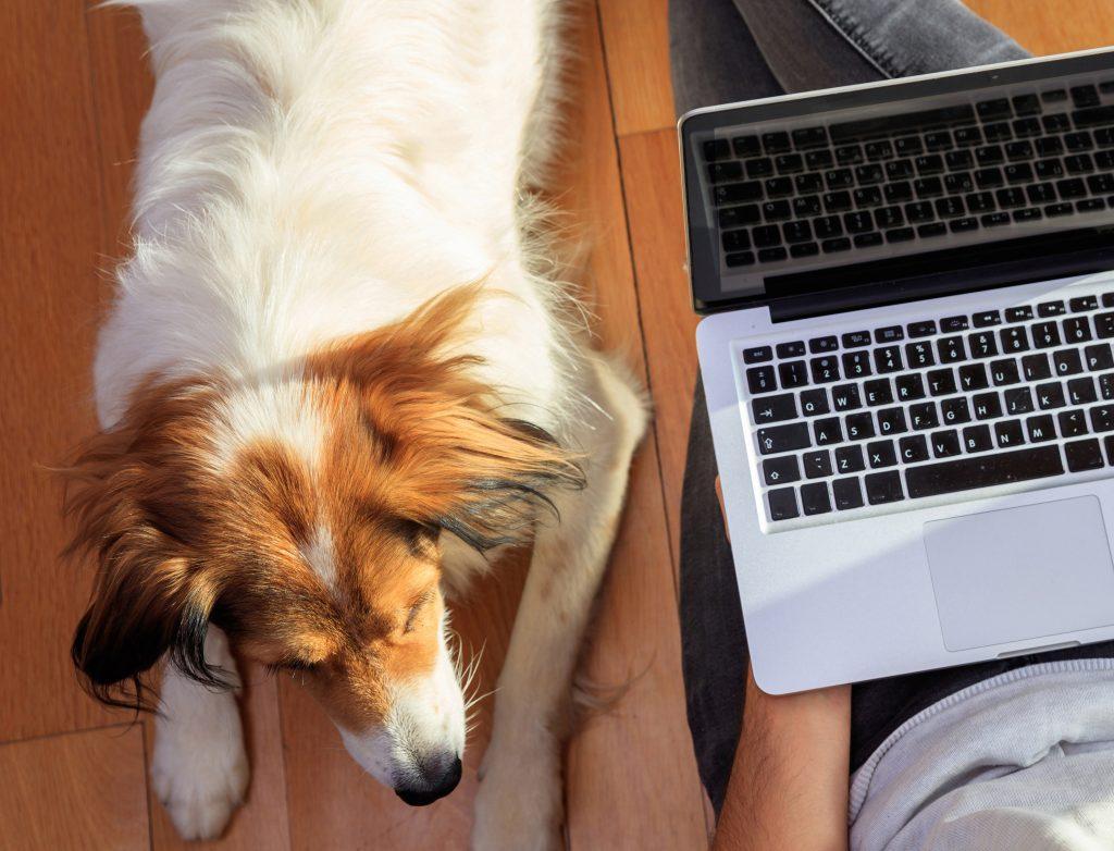 DogSmith virtual training