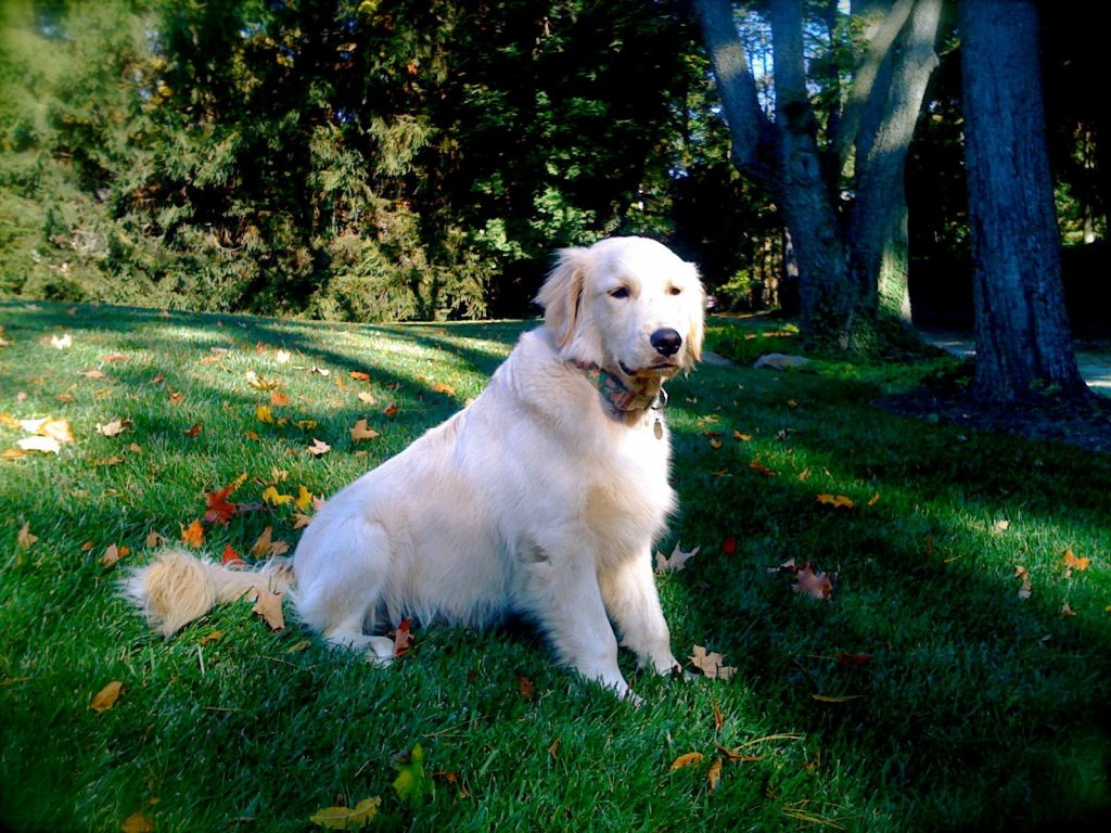 Canine Social Behavior – Your Dogs Communication System