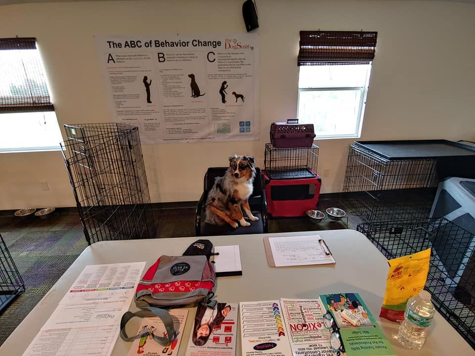 Why DogSmiths Educate Pet Owners on The Use of Positve Reinforcement Training Methods